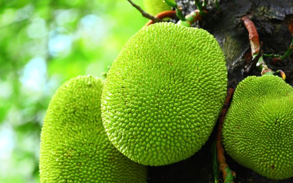 jackfruit benefits for diabetes