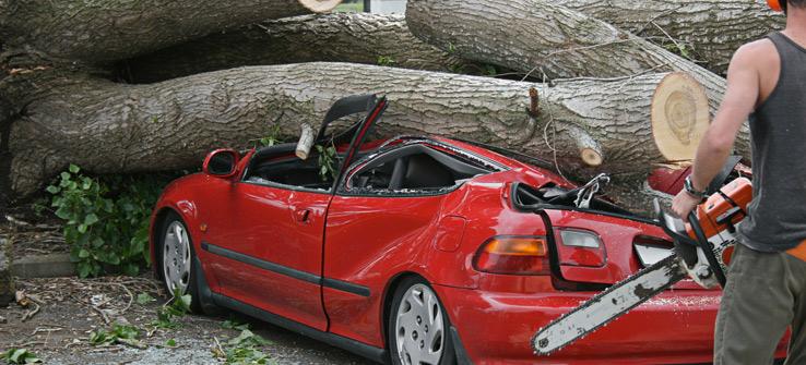 Emergency tree removal tree falls on car