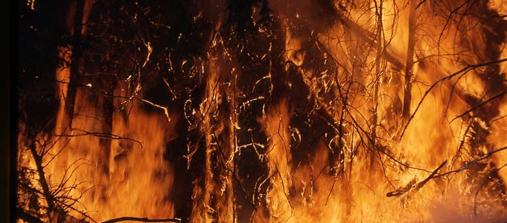 Tree service Atlanta global warming wildfire