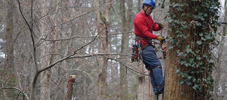 emergency tree removal atlanta ga
