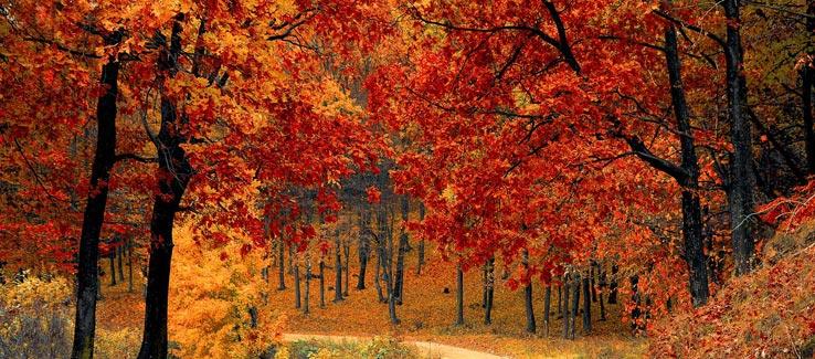 Fall leaves before winter tree dormancy Atlanta Ga