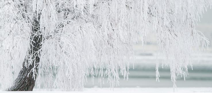 Winter tree protection Atlanta Ga