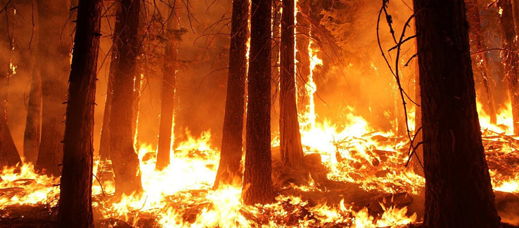 Wildfires cause land disturbance which some tree species need to regenerate