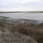 Marshside....Marsh