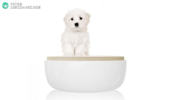Luxury-dog-beds-2014-petite-sofa-minimal-white