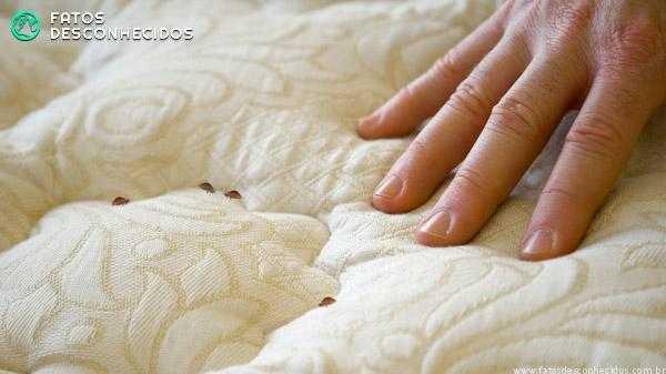 bedbugs1