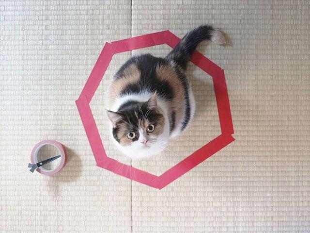 Como prender um gato em 3 passos simples sem usar a força?