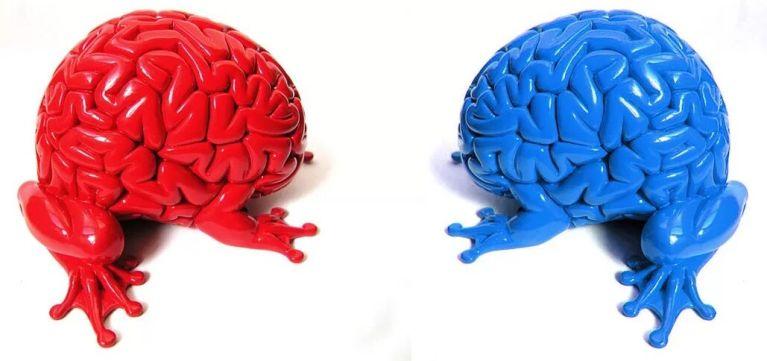 Posição política é determinada pelo tamanho do cérebro!