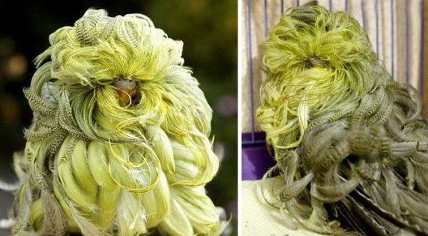 XX-Animals-That-Need-To-Get-A-Haircut-Real-Bad__700