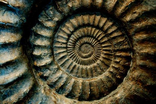 fossil_treasure