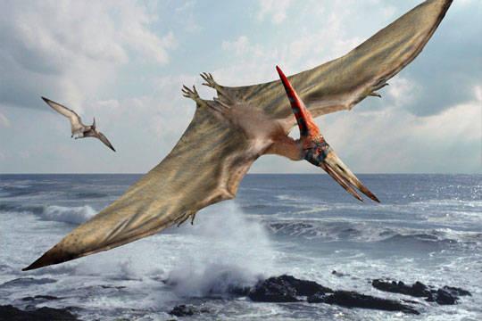 pteranodonSD