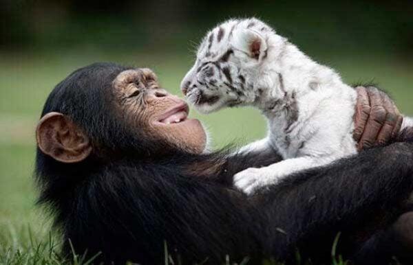 amizades-improvaveis-e-incriveis-no-mundo-animal640x512_94321aicitono_18iddn6u9pc1moe1hfrev1hdia