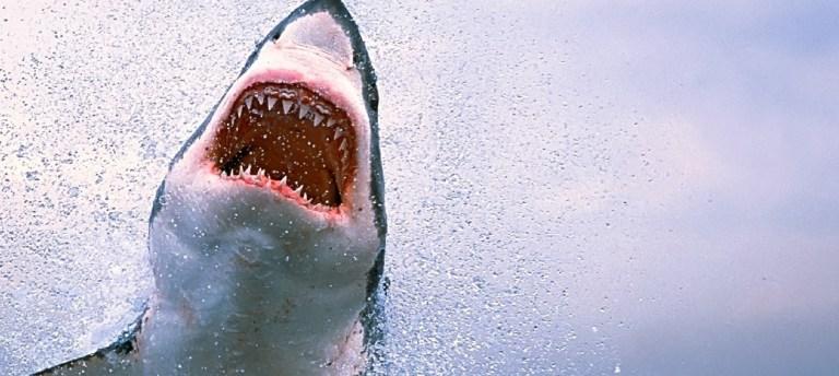 10 fatos que você não sabia sobre os tubarões