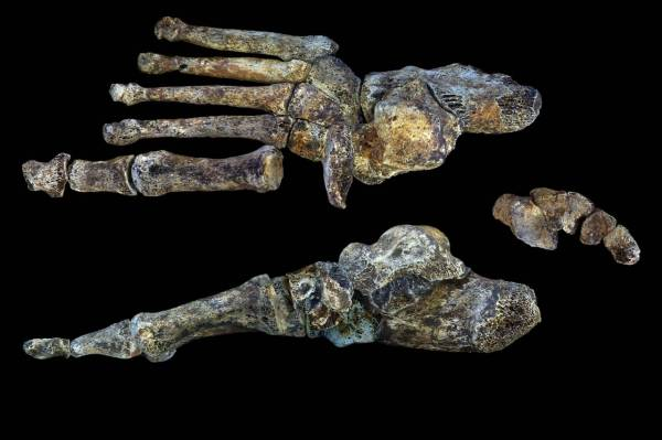 06-homo-naledi-foot-figure-peter-schmid-cc-by