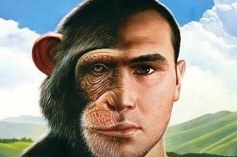 Se nós viemos dos macacos por que ainda existem macacos no zoológico?