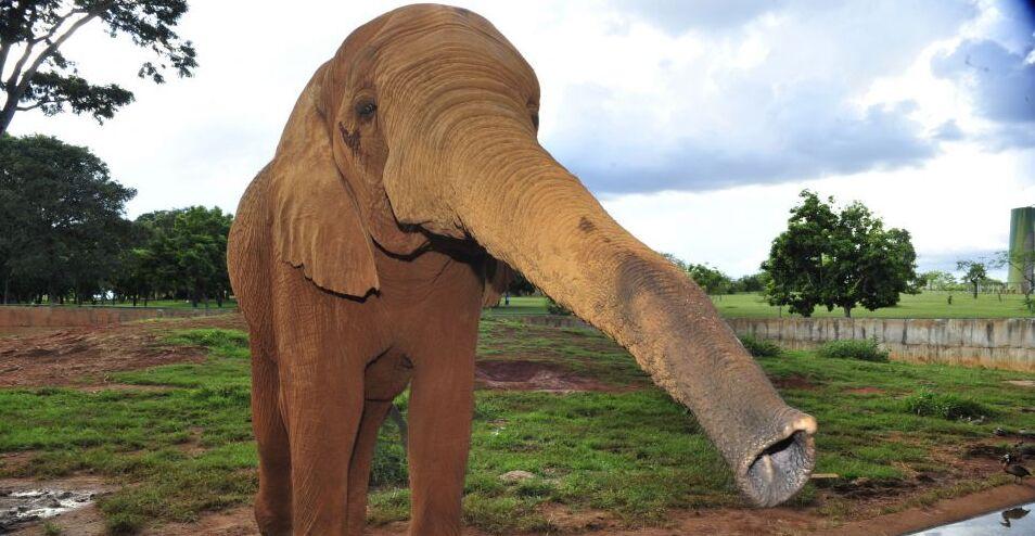 6 animais que estão evoluindo diante de nossos olhos