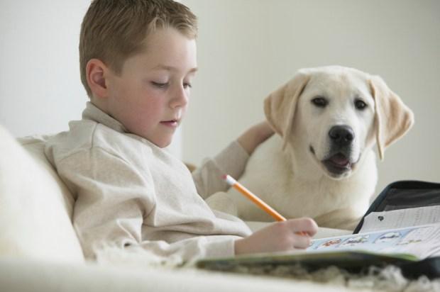 Boy With Pet Labrador Doing Homework