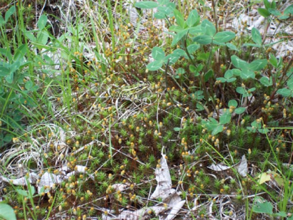 leopard-frog-camouflaged