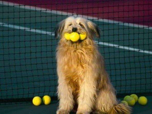 cao-tenista