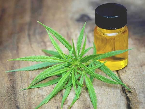 732x549 THUMBNAIL CBD Oil For Anxiety 600x450, Fatos Desconhecidos