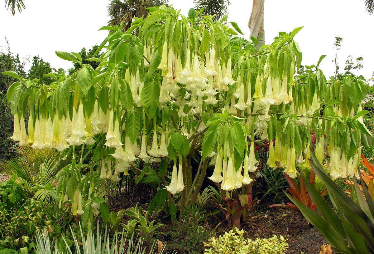 7 plantas estranhas que são verdadeiramente aterrorizantes