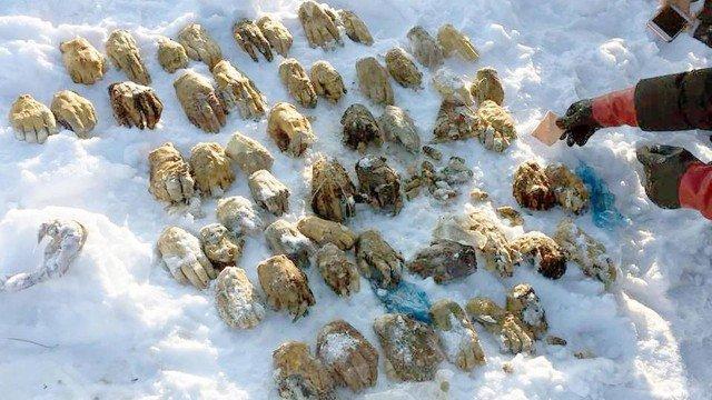Entenda o mistério por trás das 54 mãos decepadas que foram encontradas na Rússia