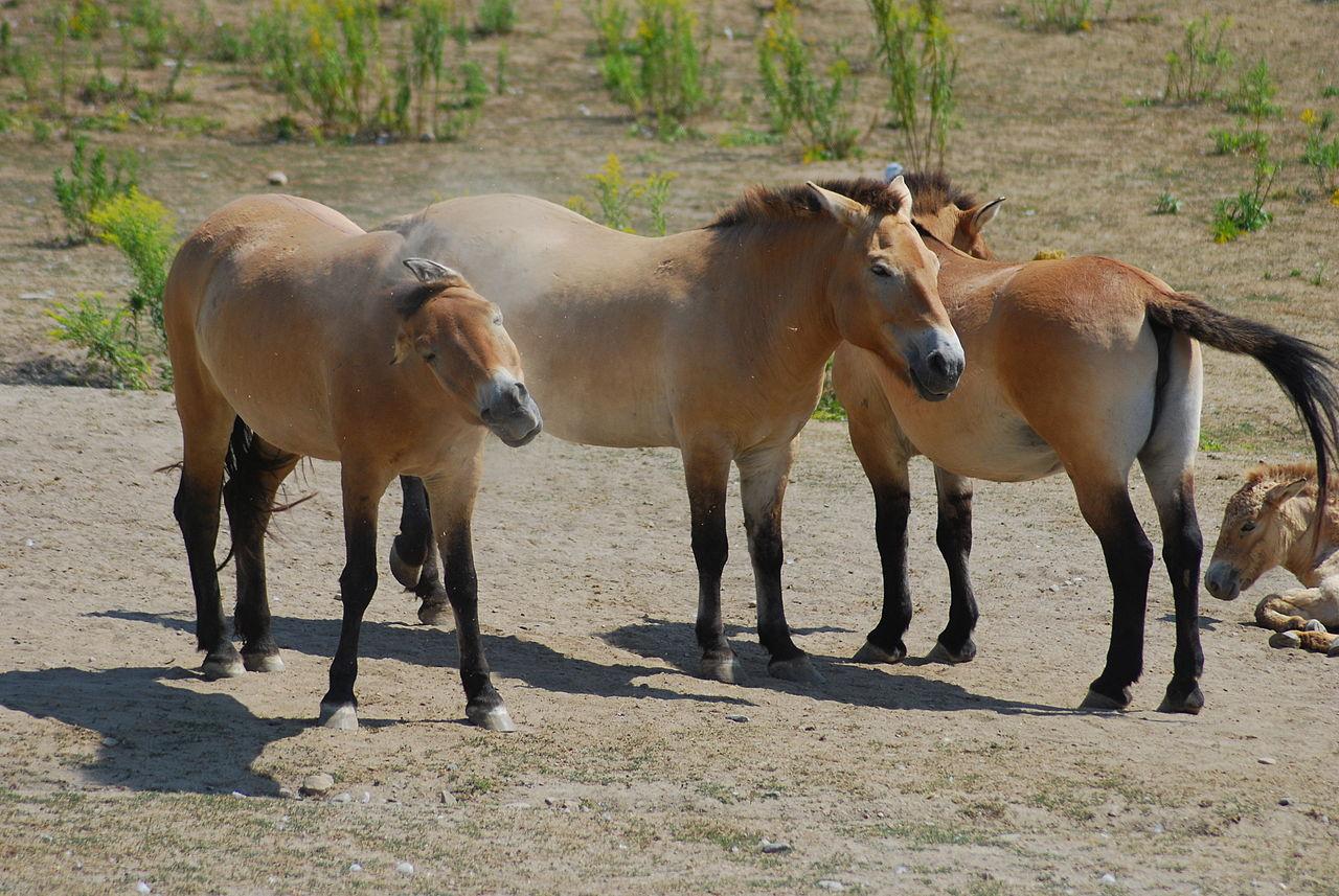 7 animais incríveis que voltaram da extinção