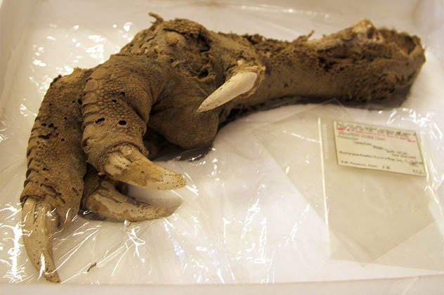 7 restos misteriosos e conservados de animais pré-históricos