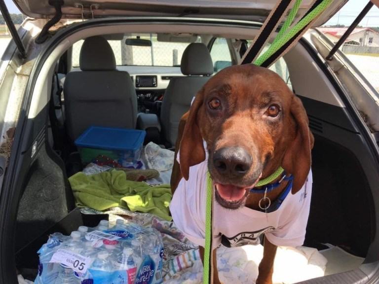 A incrível história do cachorro que caminhou mais de 3 mil km para encontrar sua família
