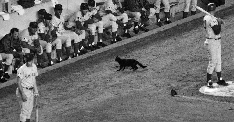 7 vezes que animais roubaram a cena em eventos esportivos