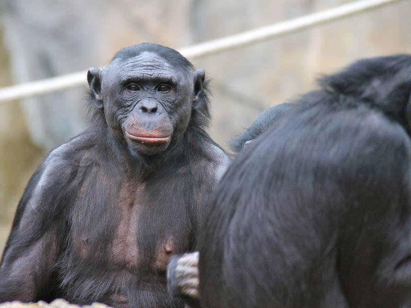 Bonobos 2012, Fatos Desconhecidos