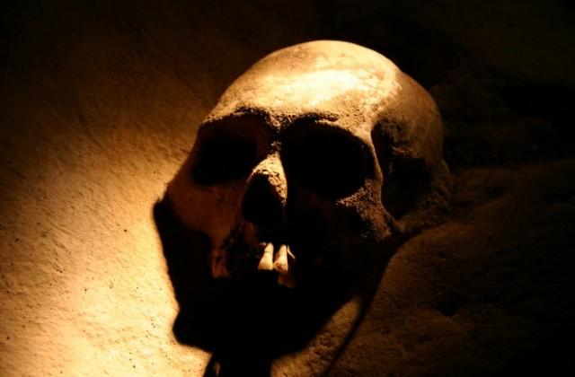 Estudo indica que homens quase causaram a própria extinção há 7 mil anos