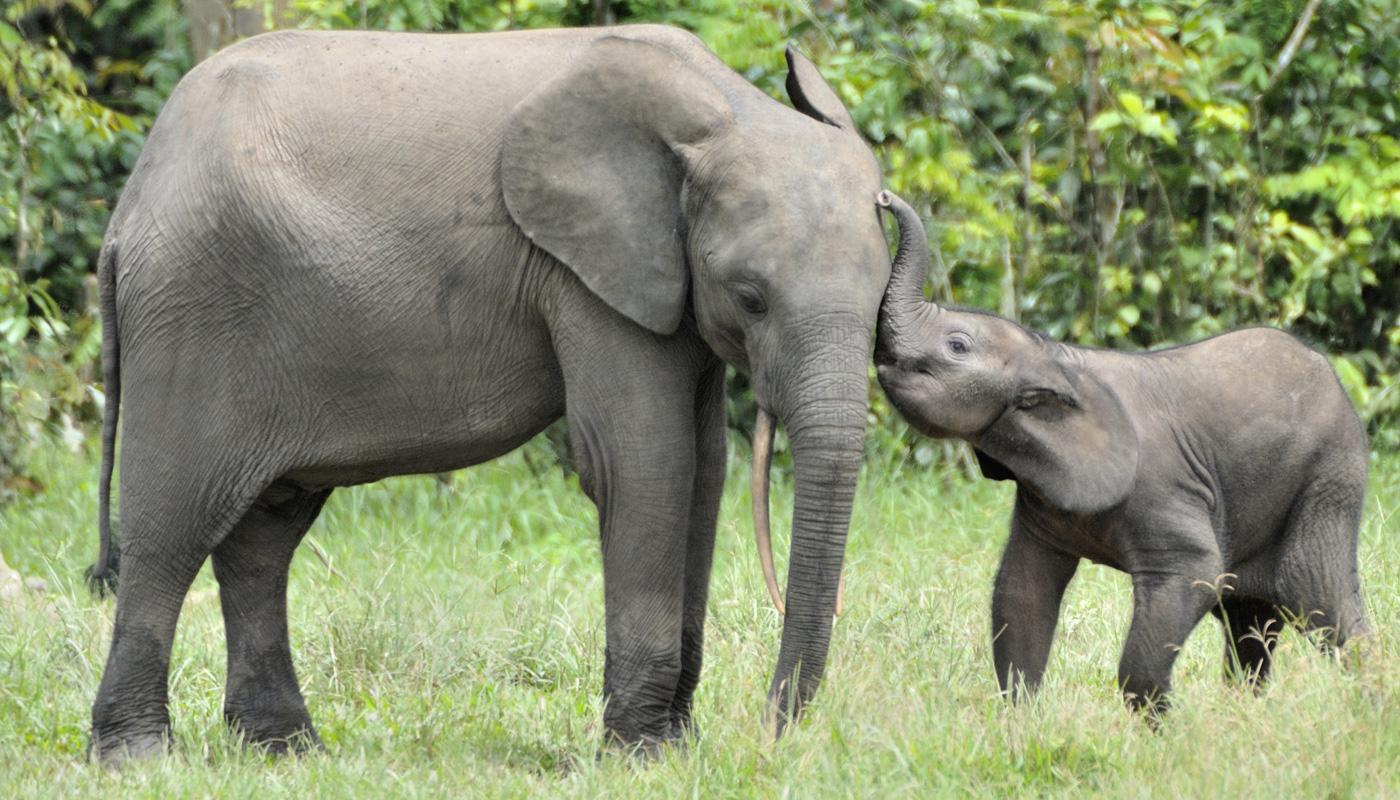 Cuidador é 'atacado' e elefante tem uma reação inesperada