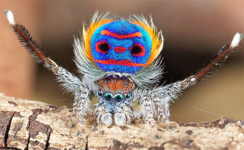 Se você odeia aranhas, nunca use essas cores
