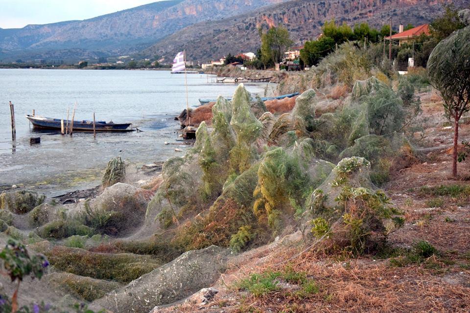 Aranhas invadem cidade grega e ocupam mais de 300 metros