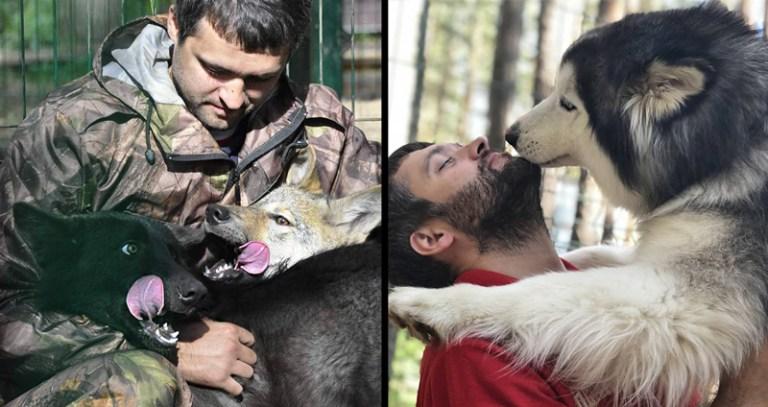 Homem cria centro de reabilitação para lobos e eles o agradecem da melhor forma