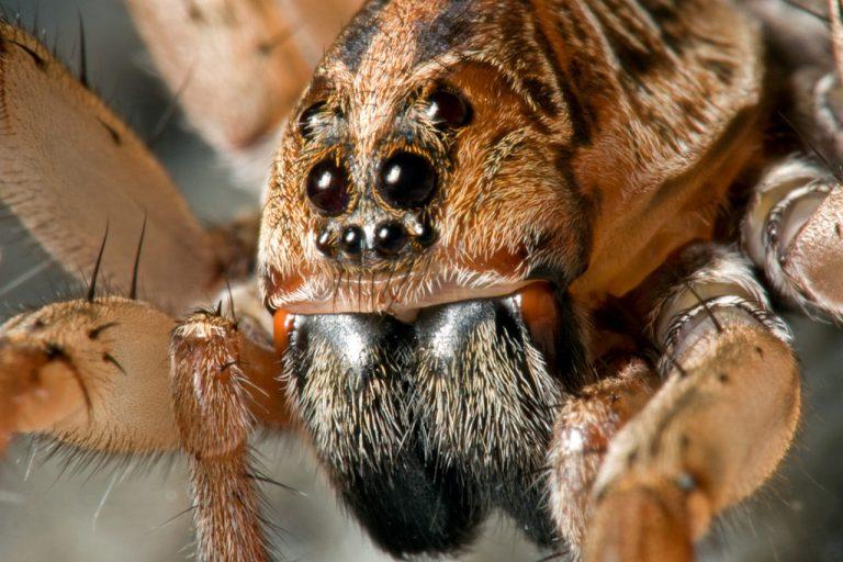 10 gifs de animais que vão assombrar seus pesadelos
