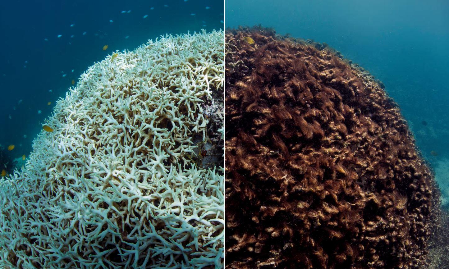 Entenda porque uma parte do fundo do mar está se dissolvendo