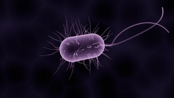 Bacteria 1832824 960 720 600x338, Fatos Desconhecidos