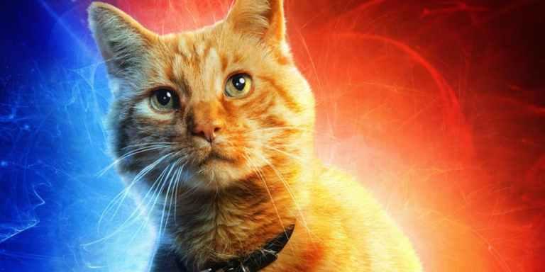 Gato da Capitã Marvel pode ter a chave para salvar o universo
