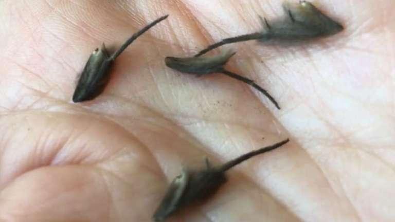 Vídeo viraliza após mulher registrar criaturas estranhas encontradas em sua casa