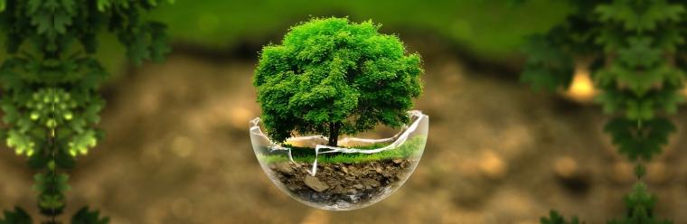 7 projetos ambientais incríveis que estão tentando salvar nosso planeta
