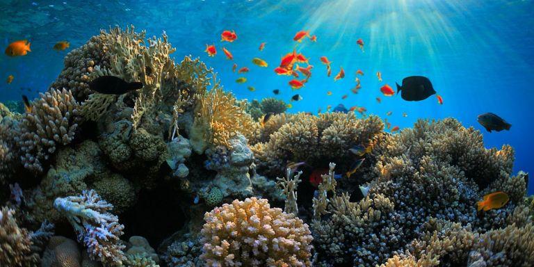 Uma barreira de corais foi tão poluída que pode ser vista do espaço