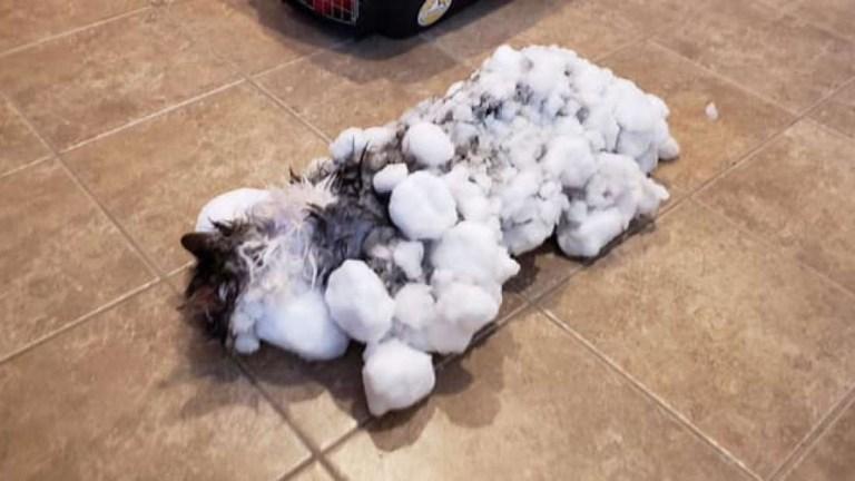 Gato congelado foi encontrado nos EUA e surpreendentemente sobreviveu