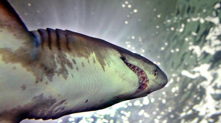 O dia em que um braço humano foi encontrado dentro de um aquário de tubarões