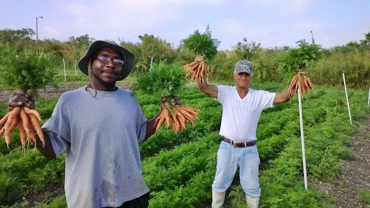 Essa fazenda de orgânicos contrata apenas moradores de rua