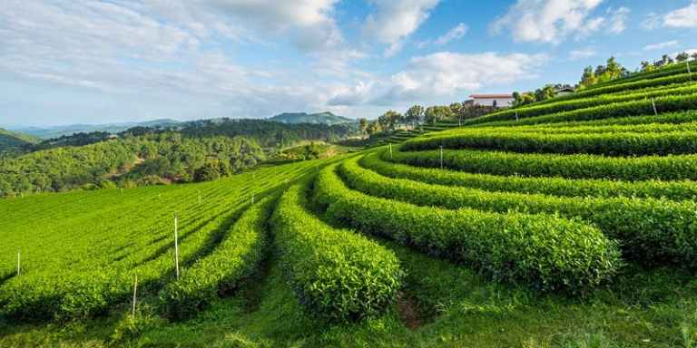 Estado na Índia é o primeiro do mundo 100% orgânico
