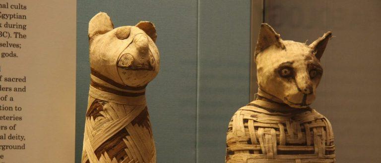 7 animais mumificados mais intrigantes já encontrados