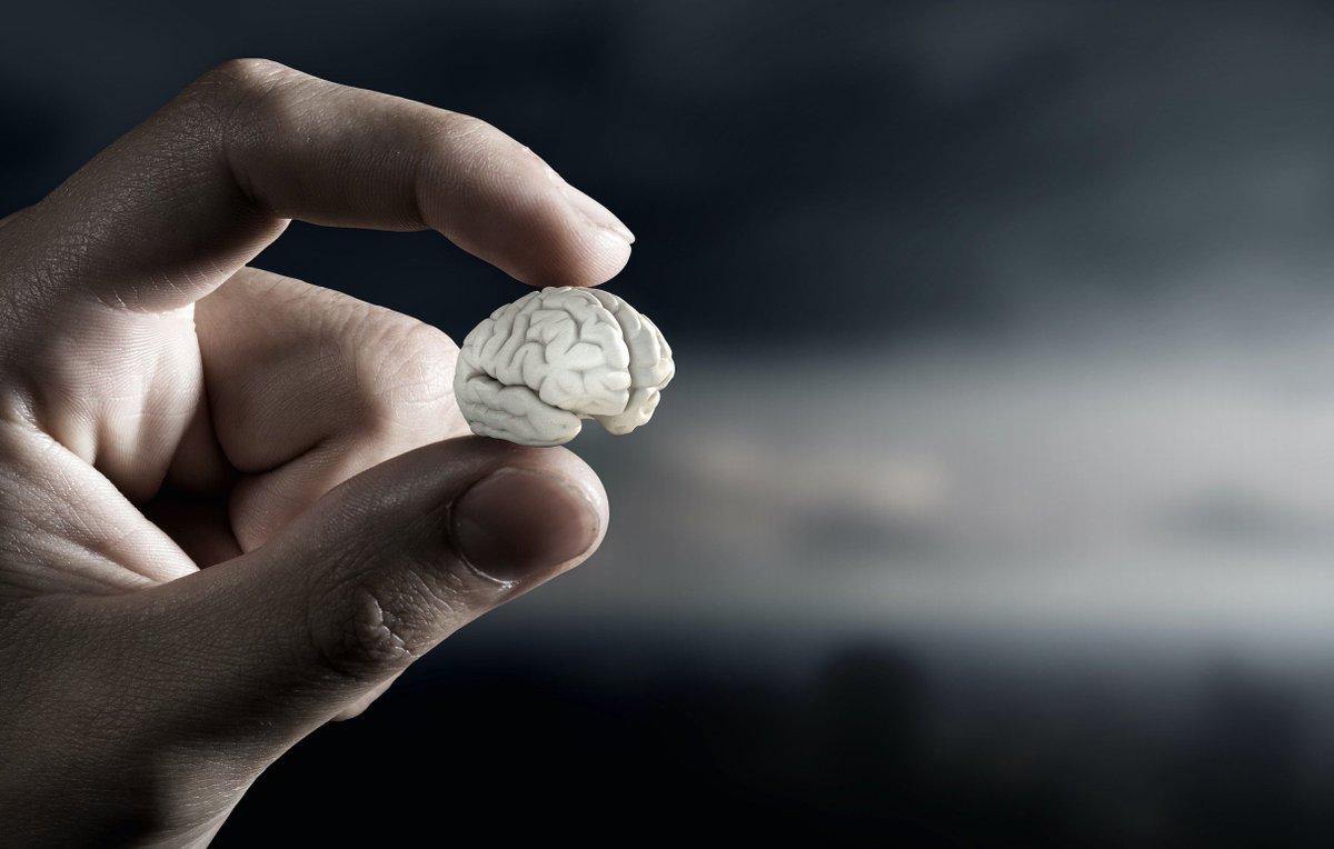 Mini cérebros artificiais já são uma realidade, entenda