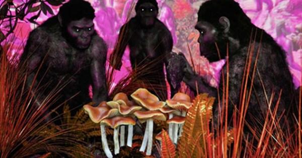 10 Stoned Apes 600x315, Fatos Desconhecidos